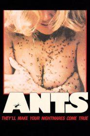 O ataque das formigas – Filme 1977