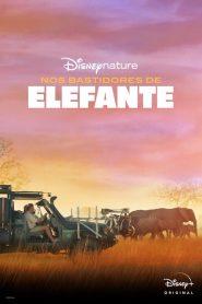Nos Bastidores de Elefante – Filme 2020