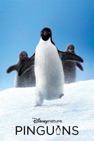 Pinguins – Filme 2019