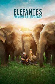 Elefantes: Em Nome da Liberdade – Filme 2018